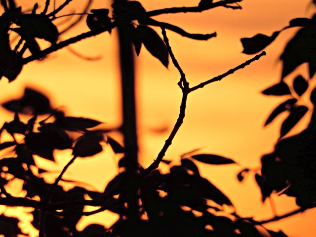 Sunset through branches.jpg