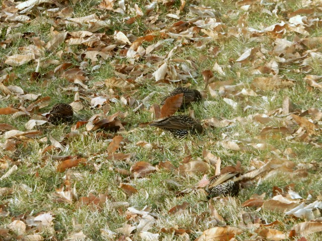birds-on-ground