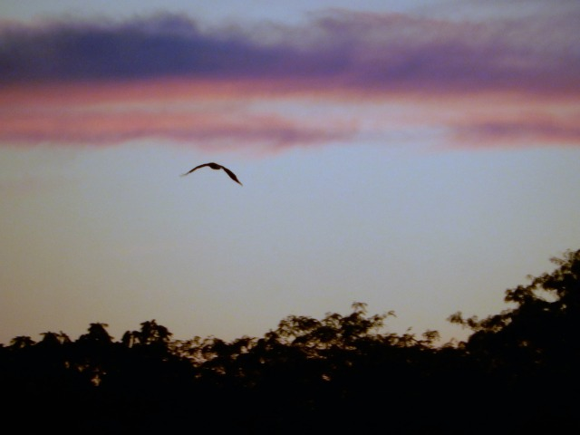 Bird in sunrise